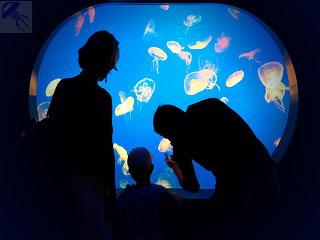 Аквариум с медузами