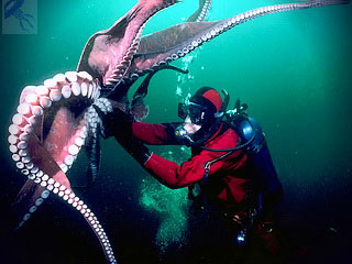 сражение с осьминогом