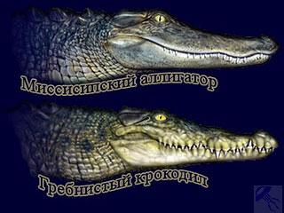 Последствия крокодила фото мужчиной лижет